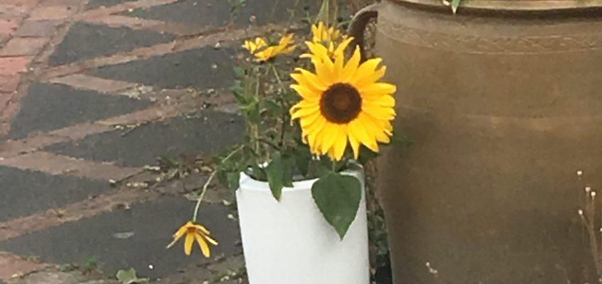 Sonnenblume am Eingang