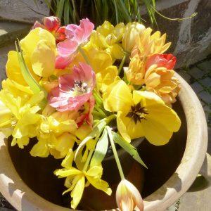 und den Zugang: Tulpen
